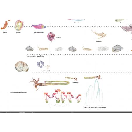 Linia życia na Ziemi - zmywalna mata 232 x 67 cm - Druga Wielka Lekcja Montessori