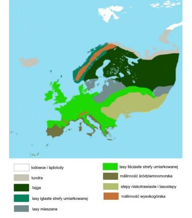 Europa - mapa biomowa - 50 x 65 cm