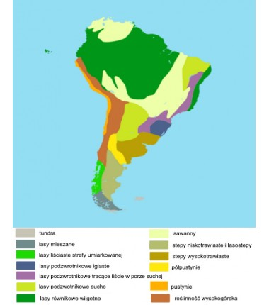 South America - biome washable map - 50 x 65 cm